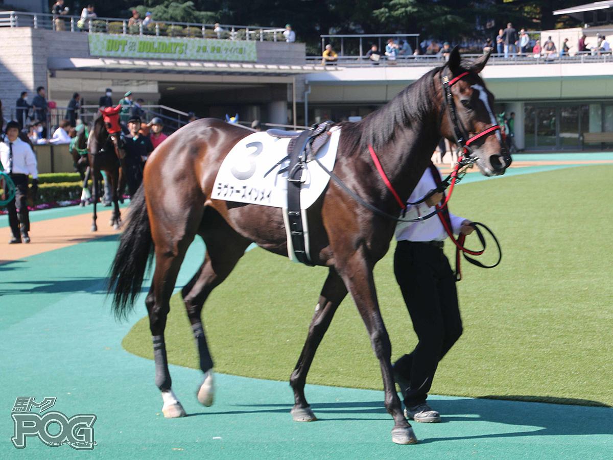 ラヴァーズインメイの馬体写真