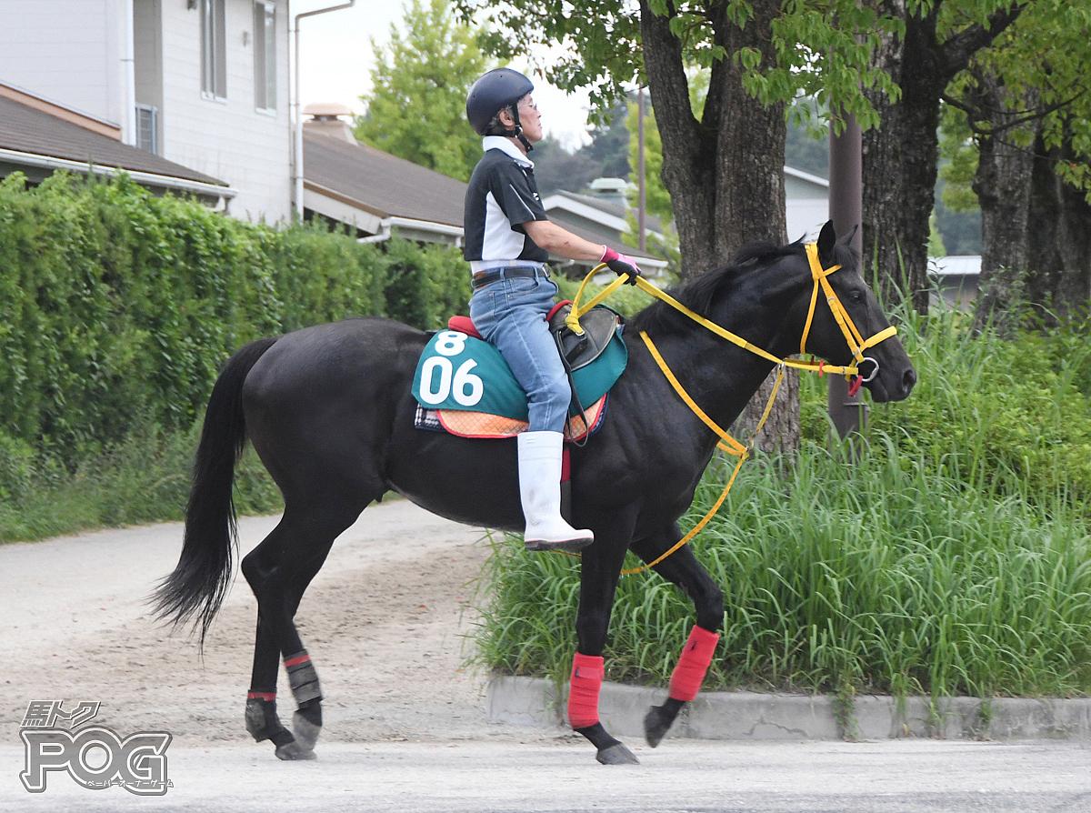 クリノダイヤモンドの馬体写真