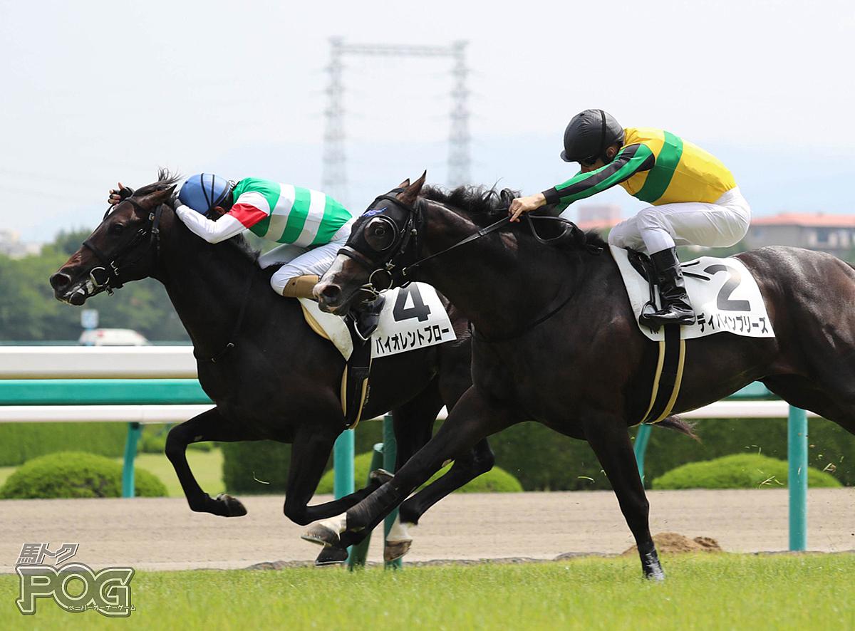 バイオレントブローの馬体写真