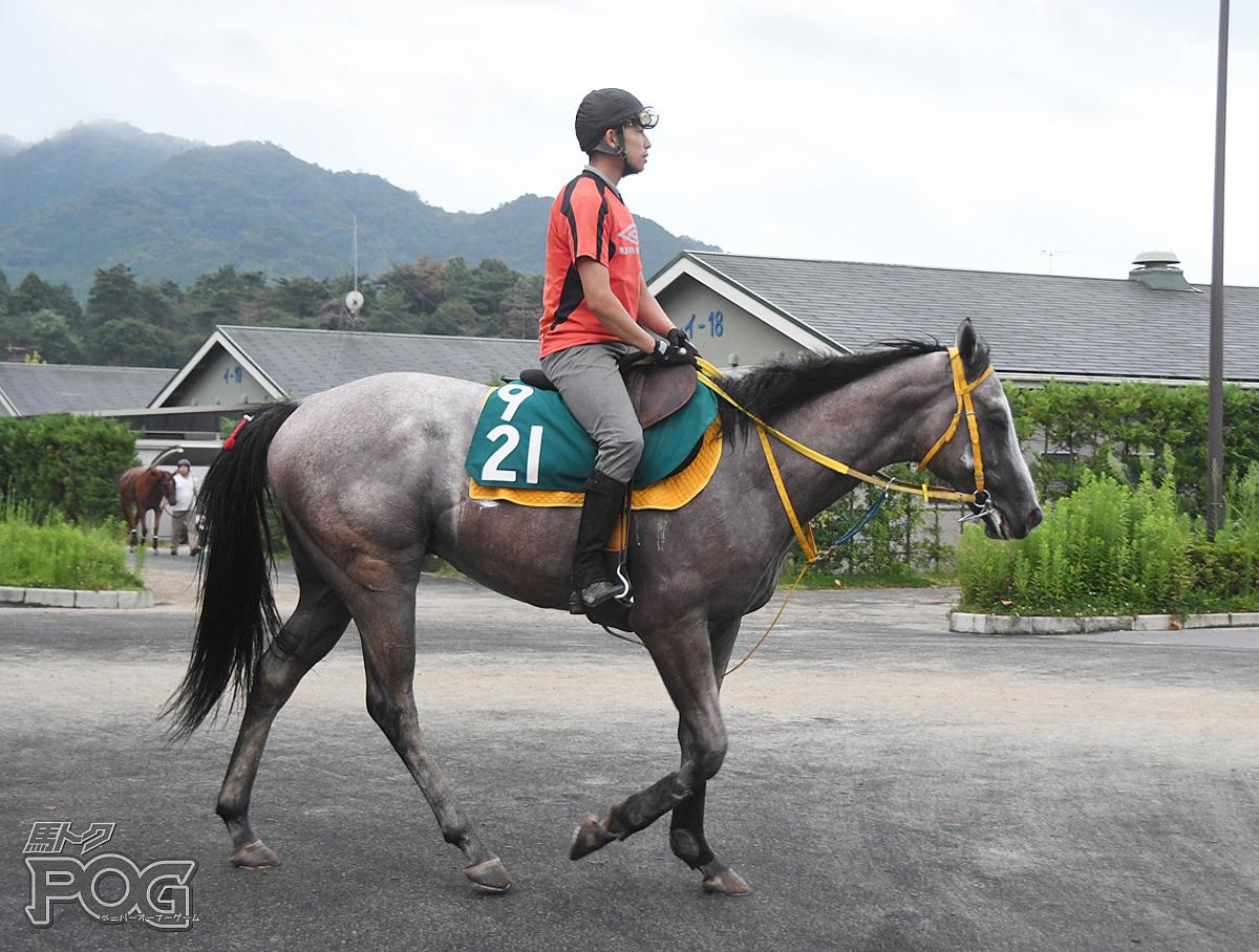 トモジャクアルトの馬体写真