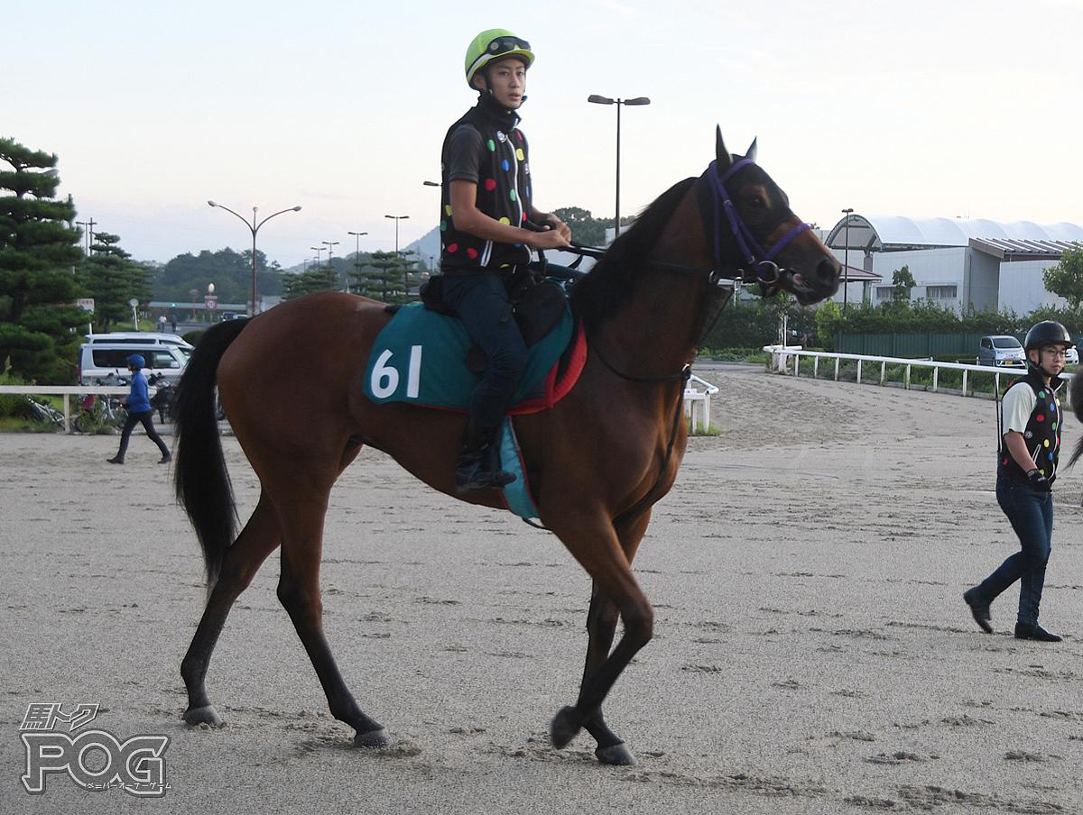 エーティードラゴンの馬体写真