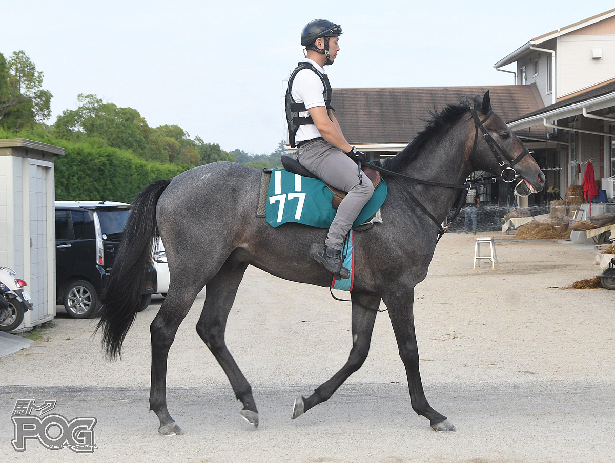 メイケイゴールドの馬体写真