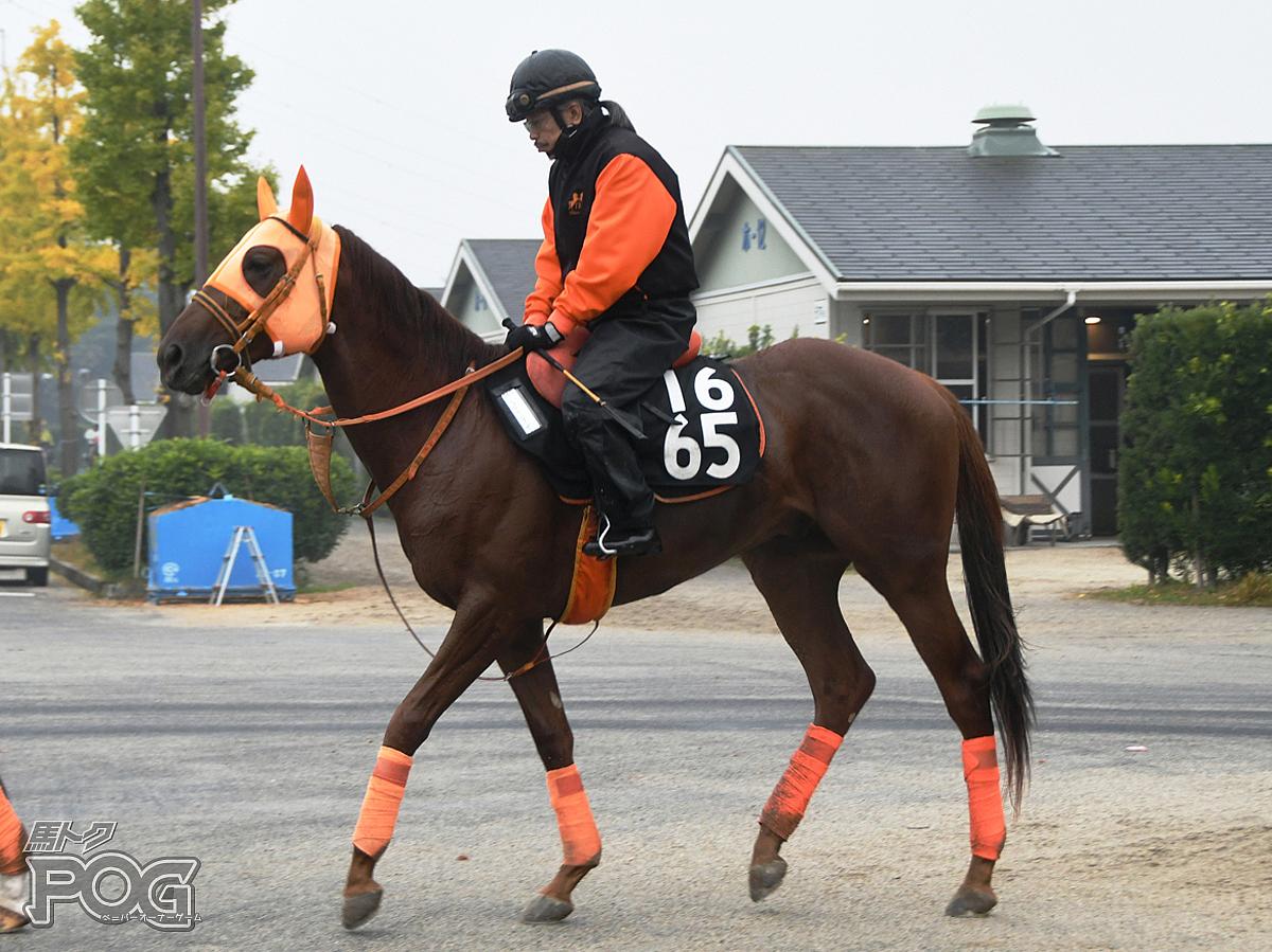 ショウナンラーゼンの馬体写真