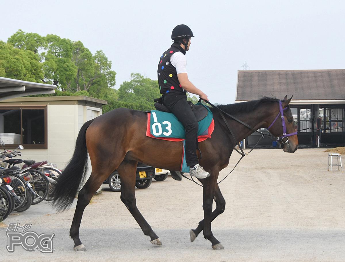 クレスコセイランの馬体写真