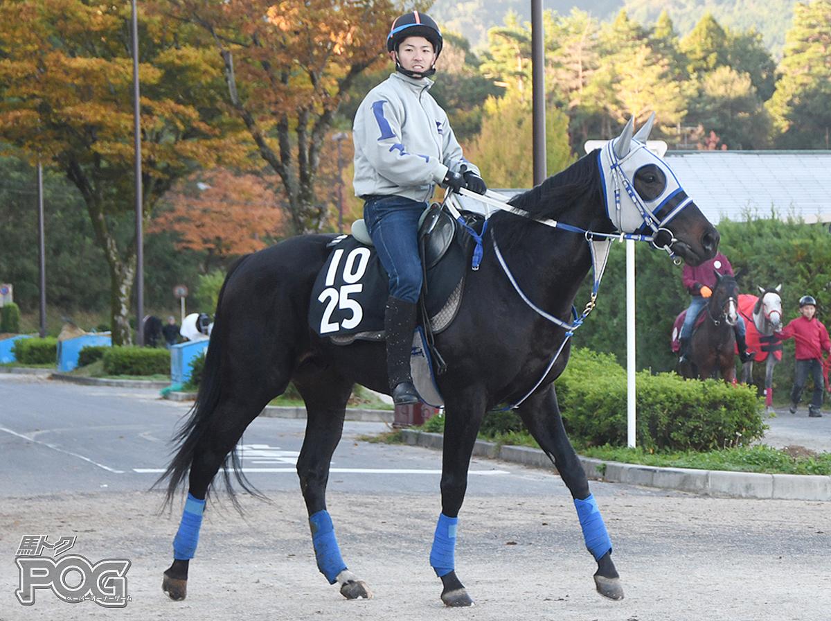 メイショウカクウンの馬体写真
