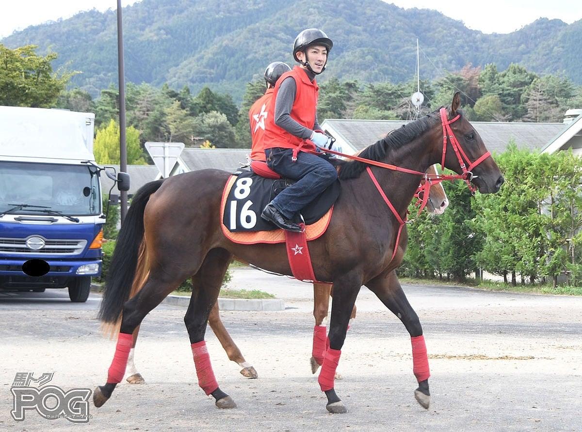 ピカバの馬体写真