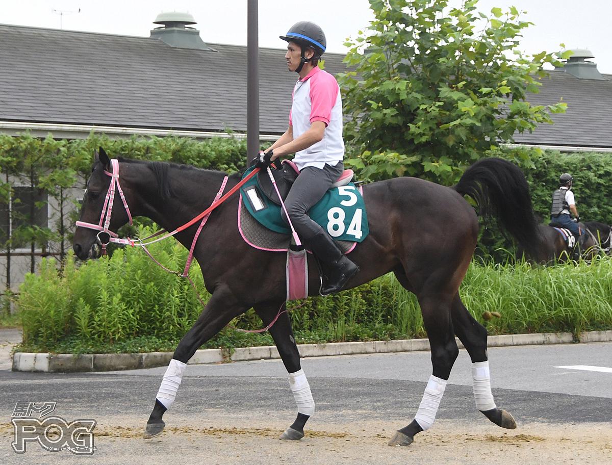 ストリの馬体写真