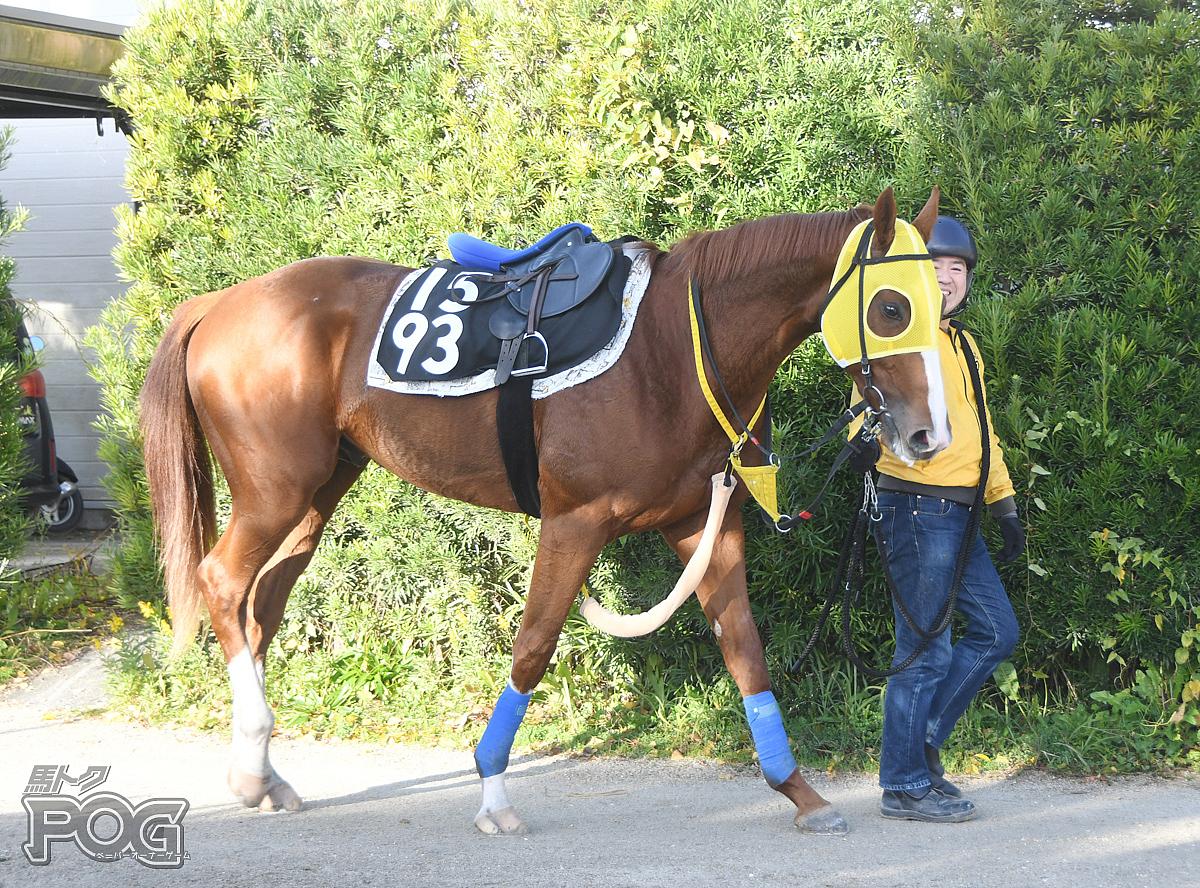 メイショウイサナの馬体写真