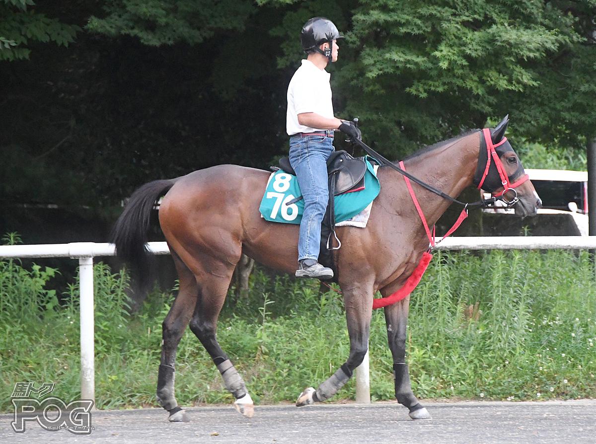 ブランズハッチの馬体写真