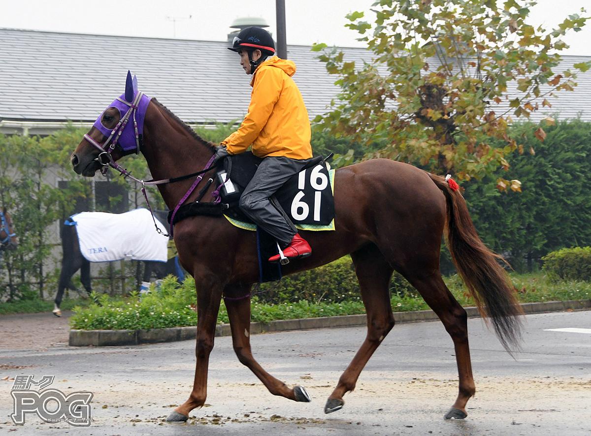 マリーベリーの馬体写真