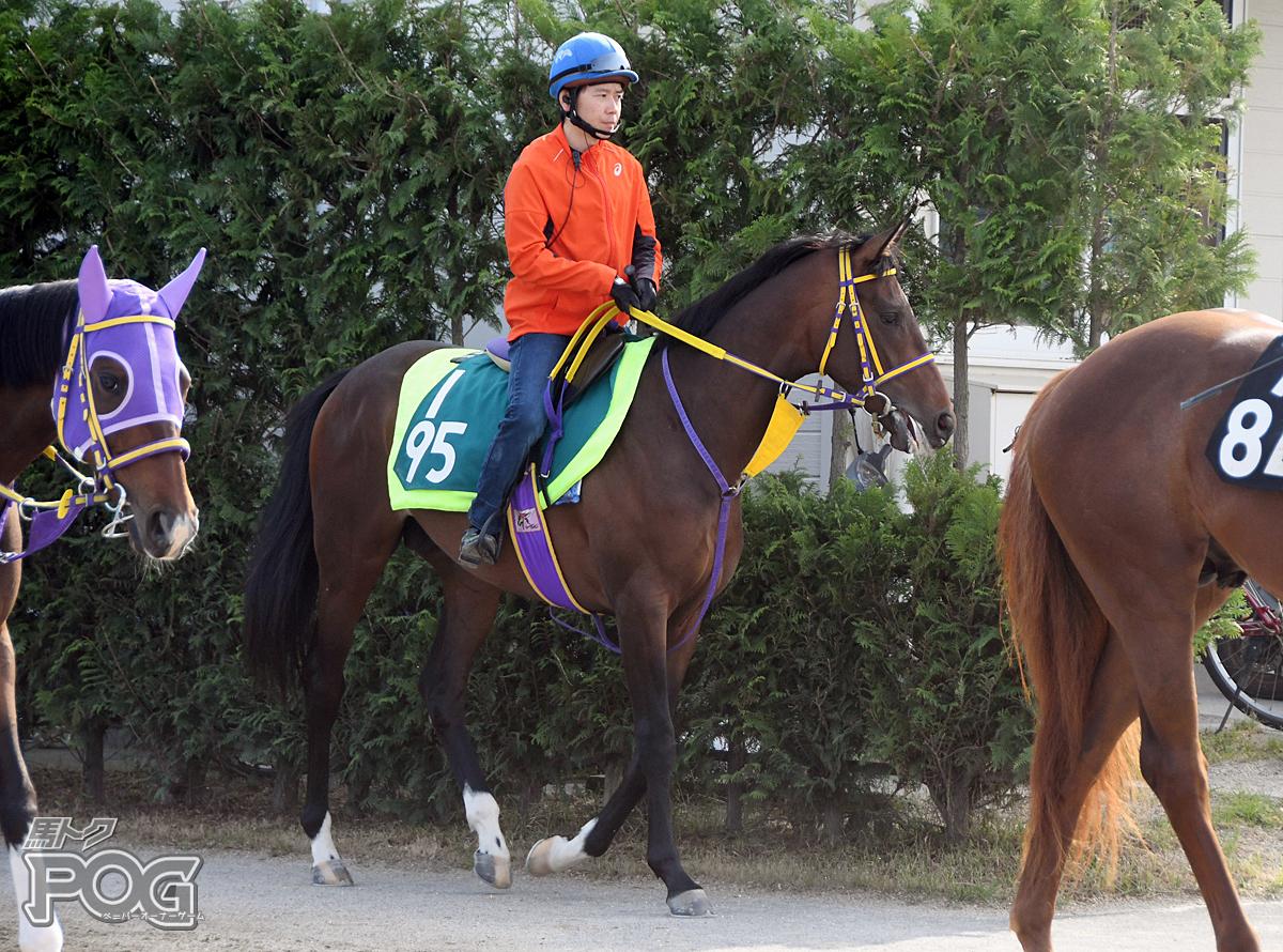 アドマイヤサンの馬体写真