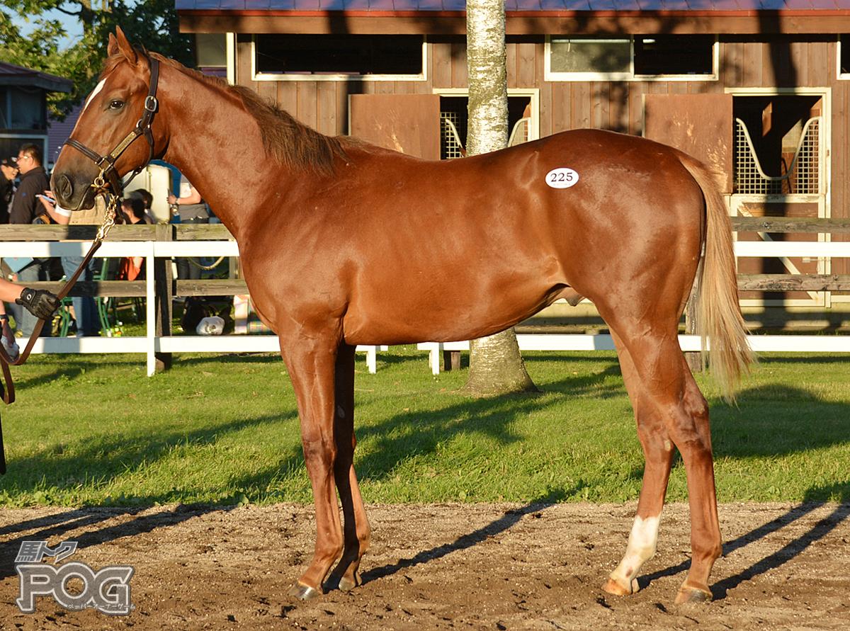 ヴァザーリの馬体写真