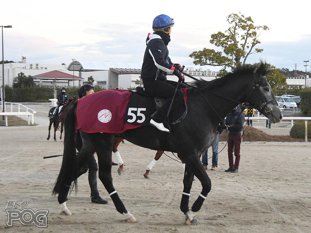 アベンチュリンの馬体写真