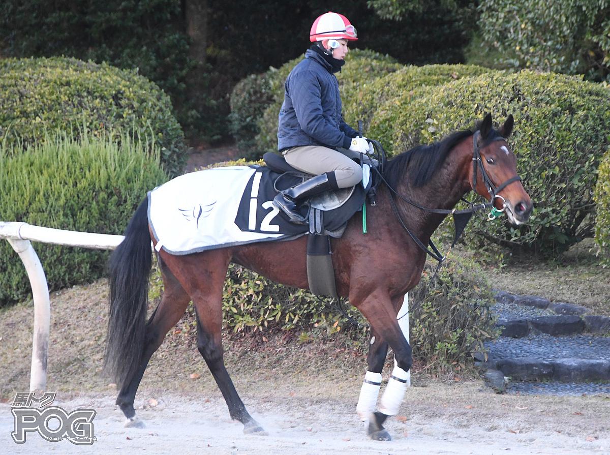 ヴァイザッハの馬体写真