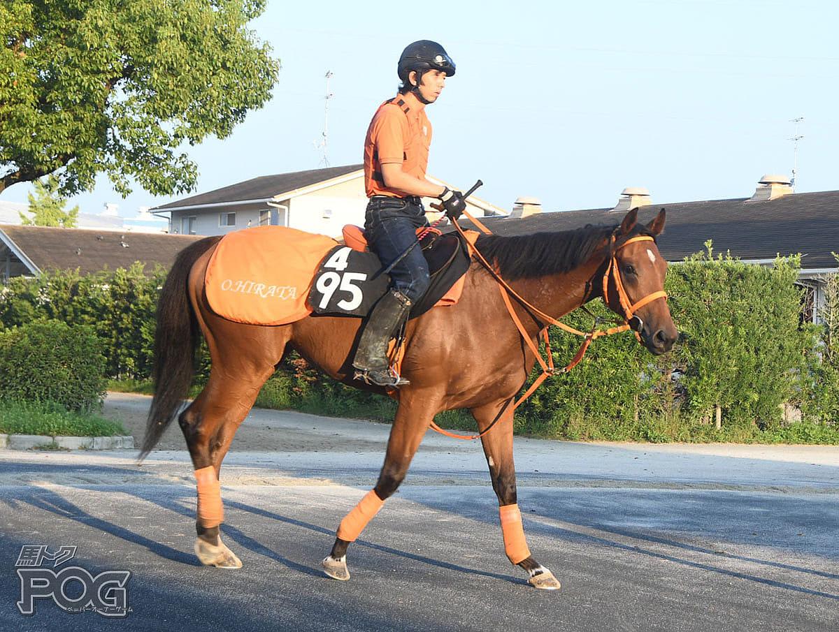 シールヴィクトリーの馬体写真