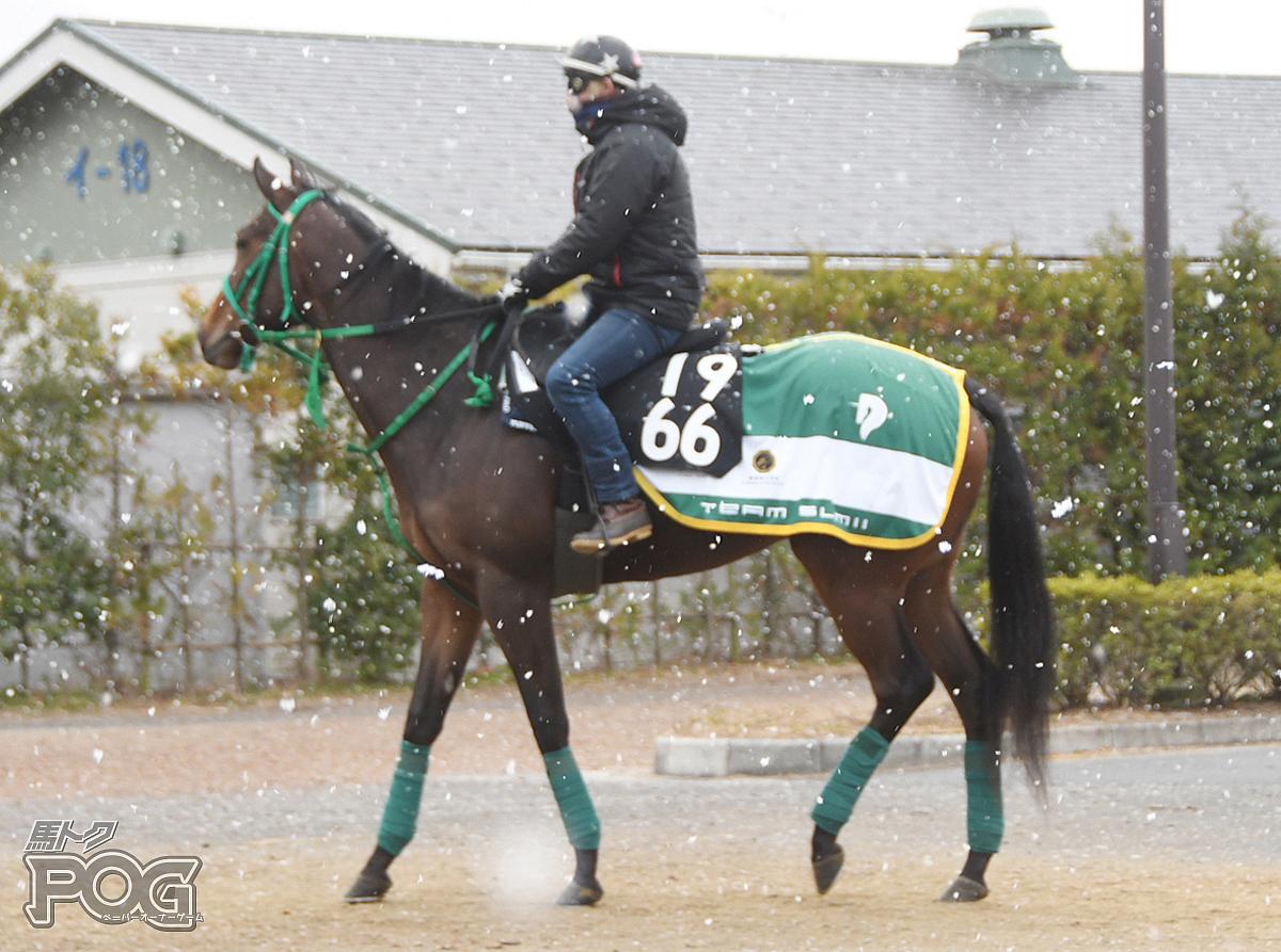 ブリオレットの馬体写真
