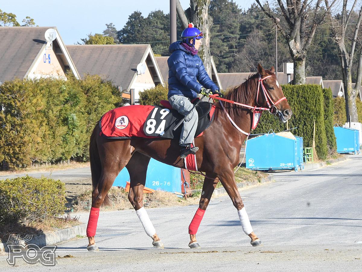 シーアフェアリーの馬体写真
