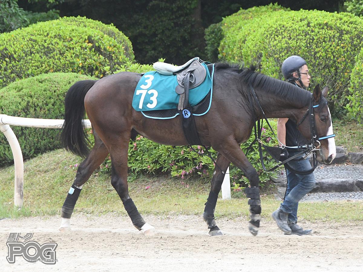 ポジティブスタンドの馬体写真