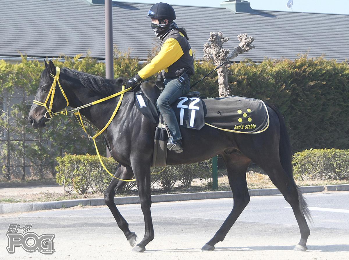 レイヴンウイングスの馬体写真