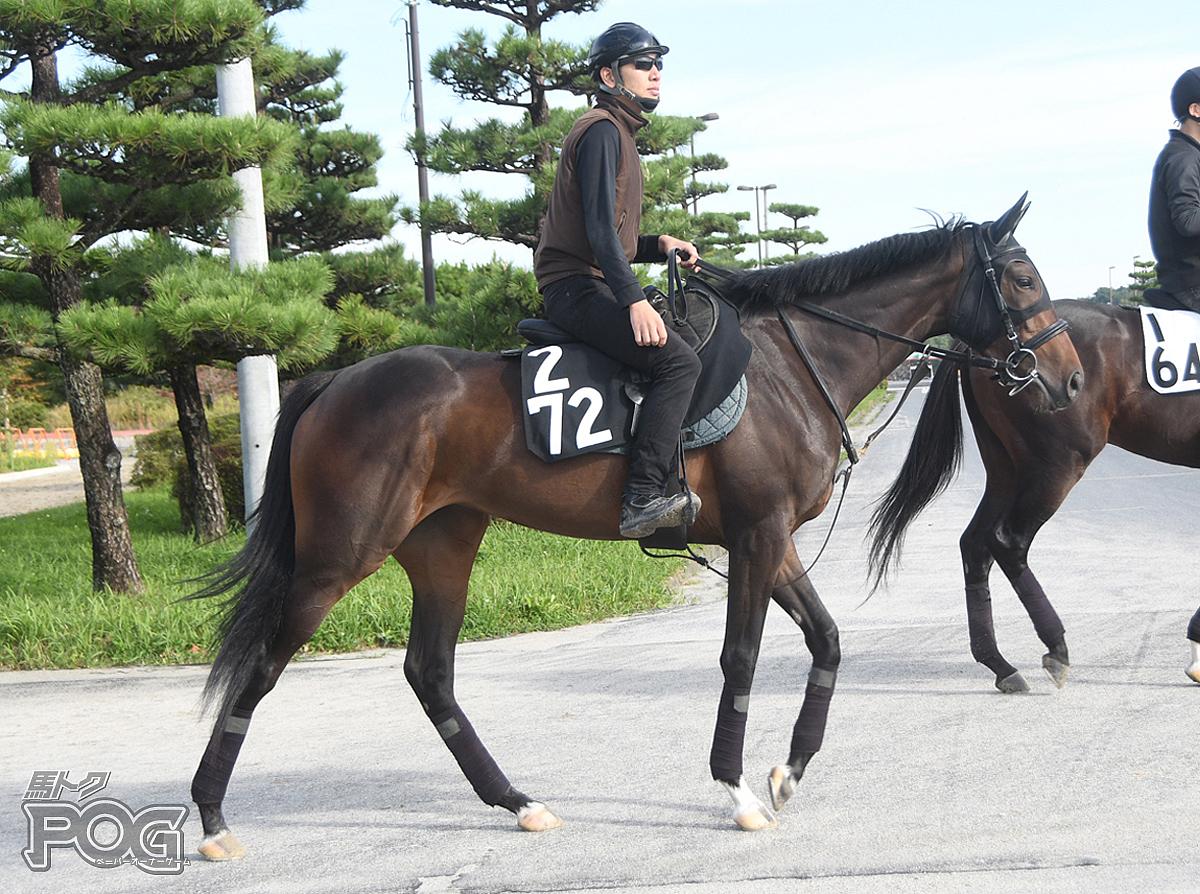 クナップフラウの馬体写真