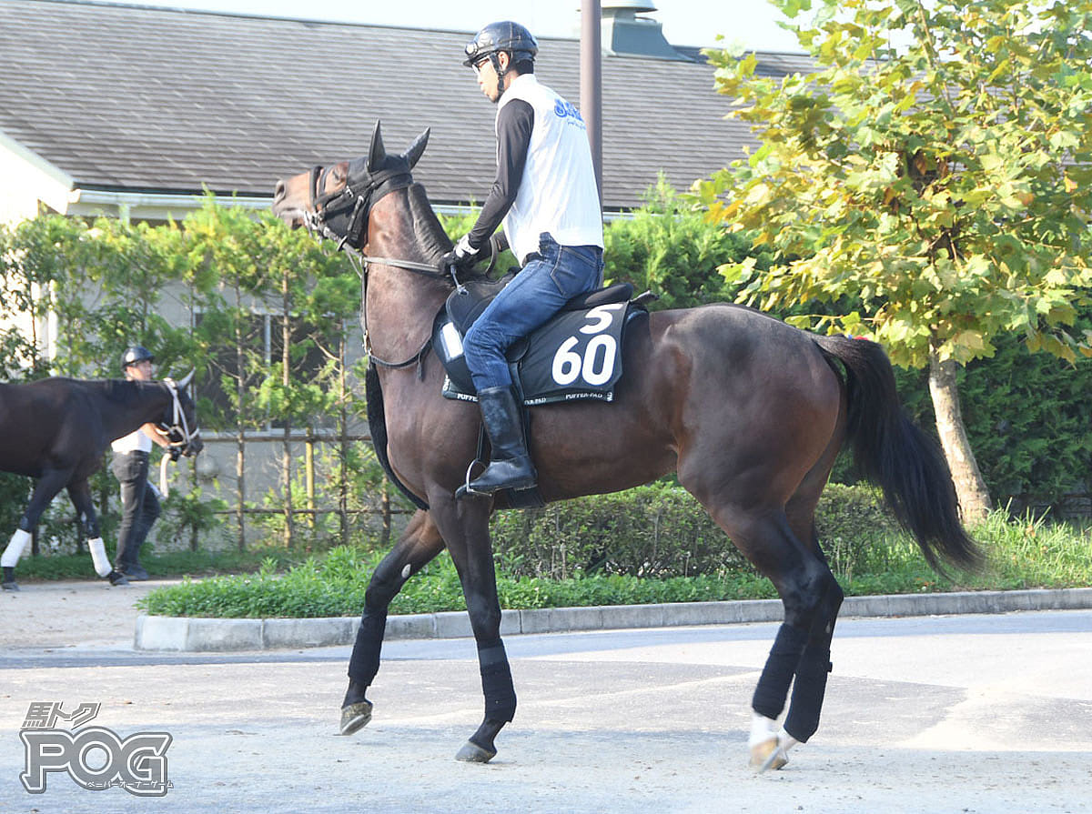 ソーグレアの馬体写真