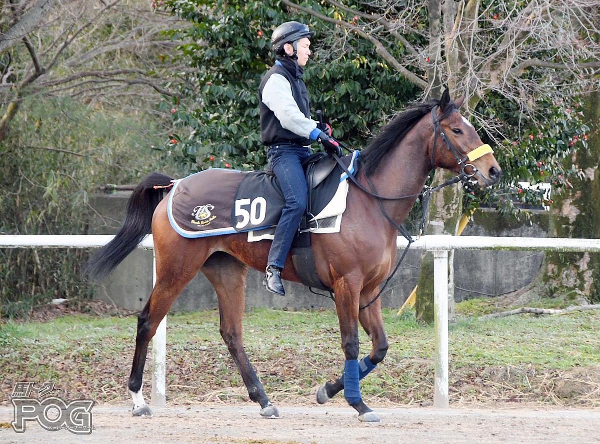 アナザーパラダイスの馬体写真