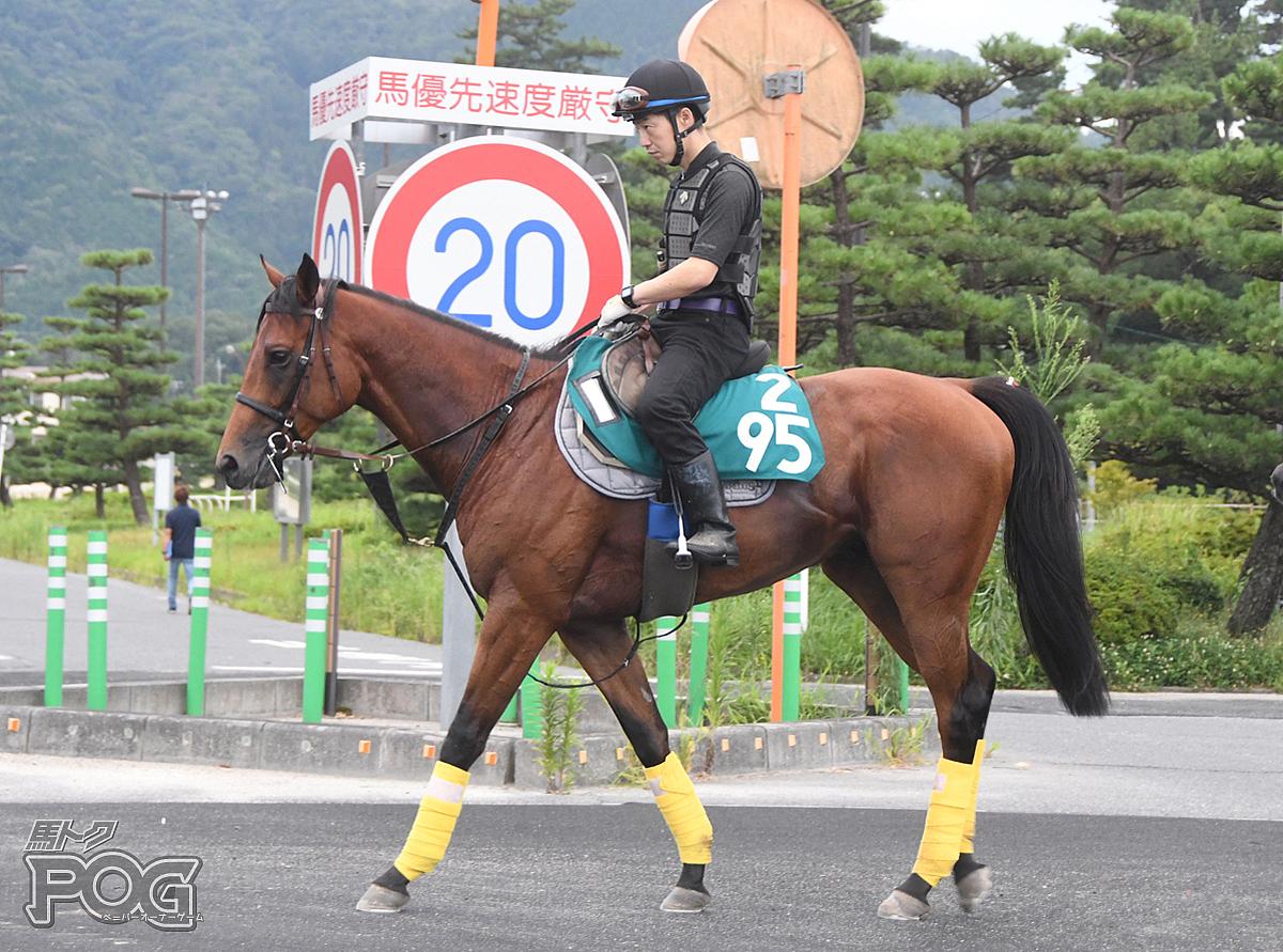 ルリジオンの馬体写真