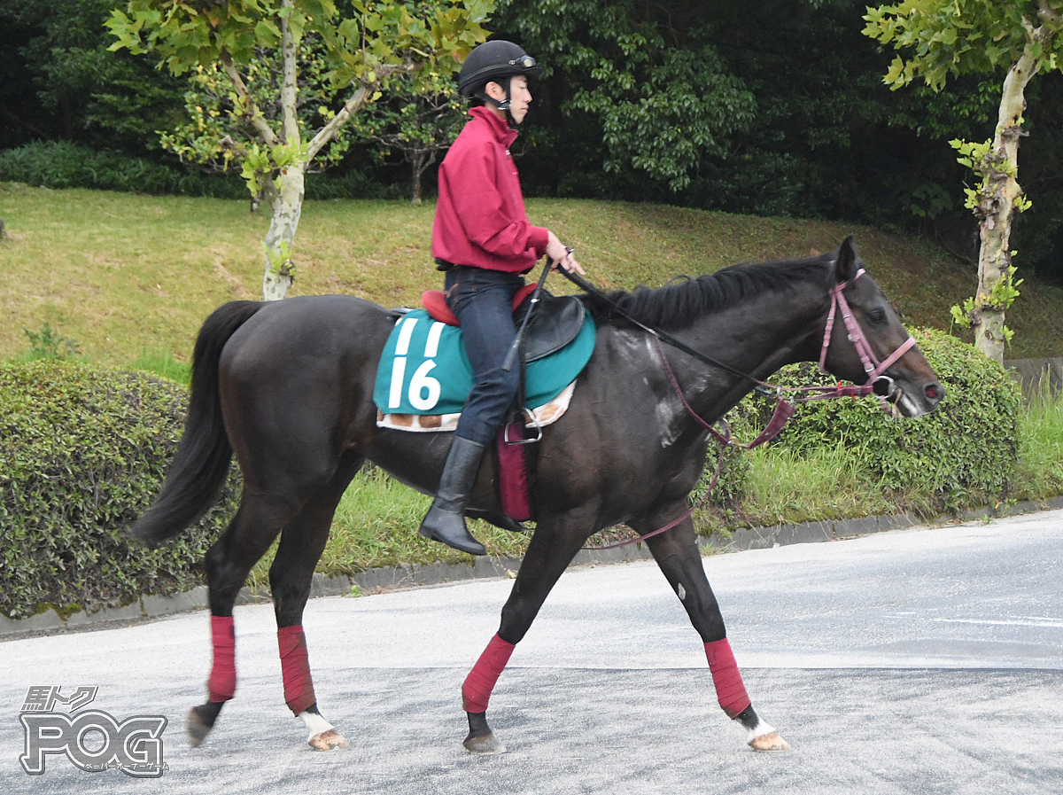 ブラゾンダムールの馬体写真
