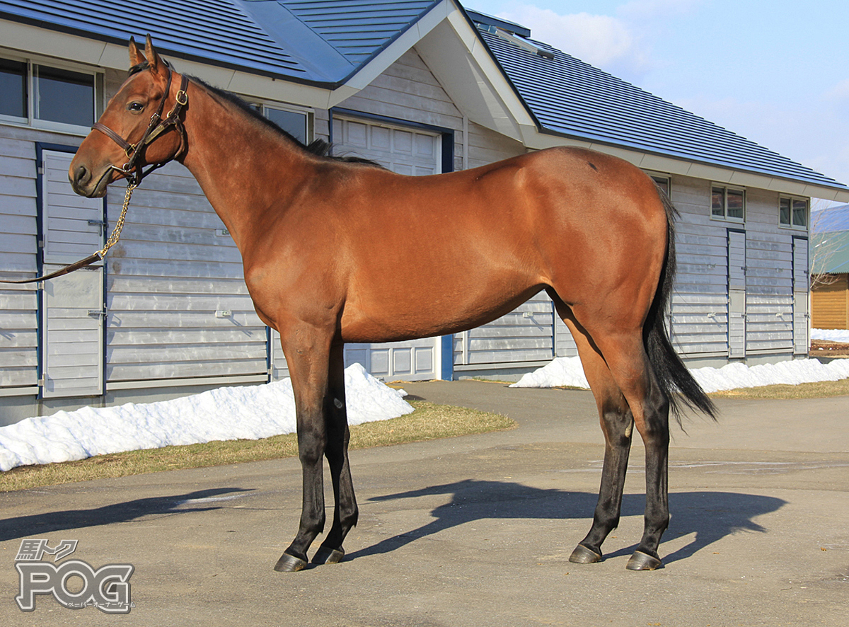 オルトシアの馬体写真