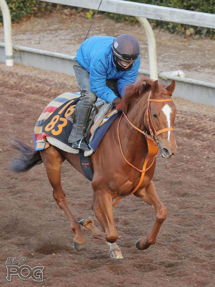 レジーナドーロの馬体写真