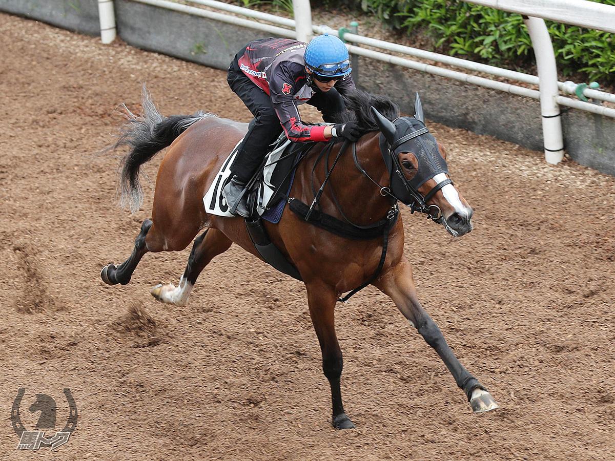 アドラータの馬体写真