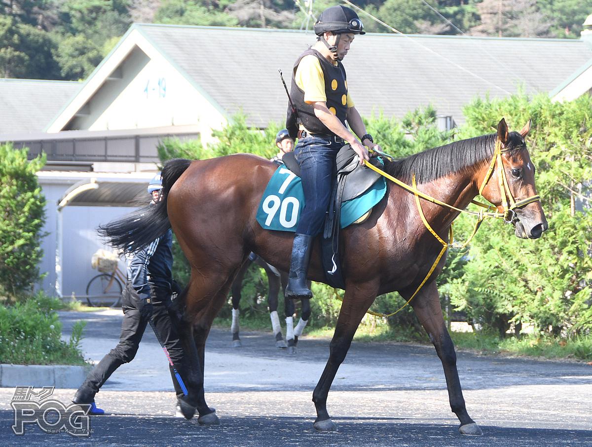 アンヴァルの馬体写真