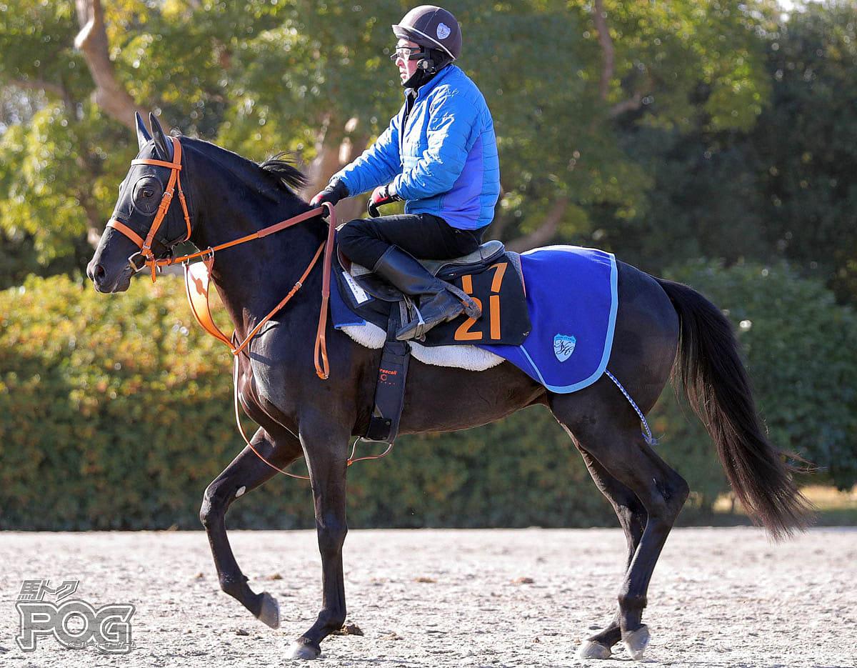 ウムラオフの馬体写真