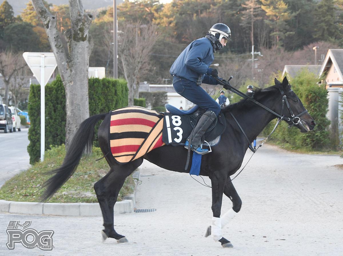 フォルシュナイトの馬体写真