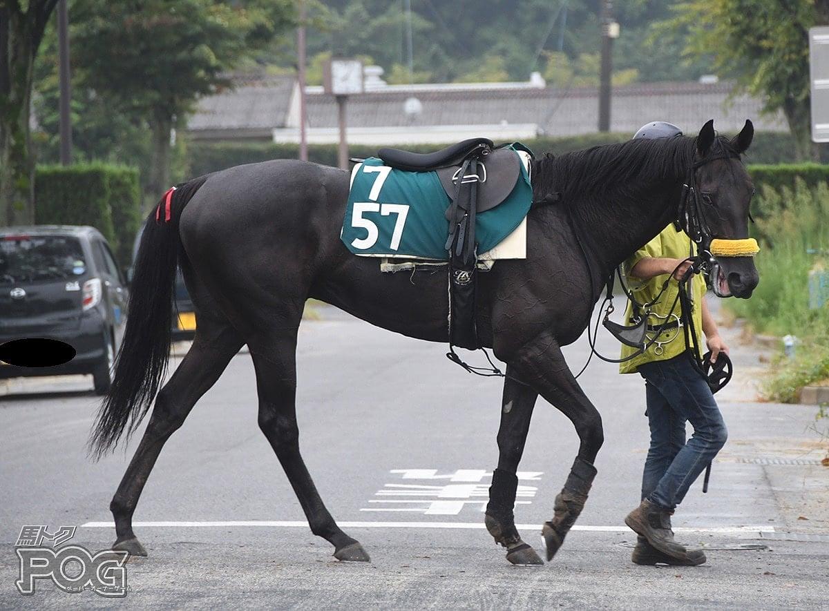 クレバーバードの馬体写真