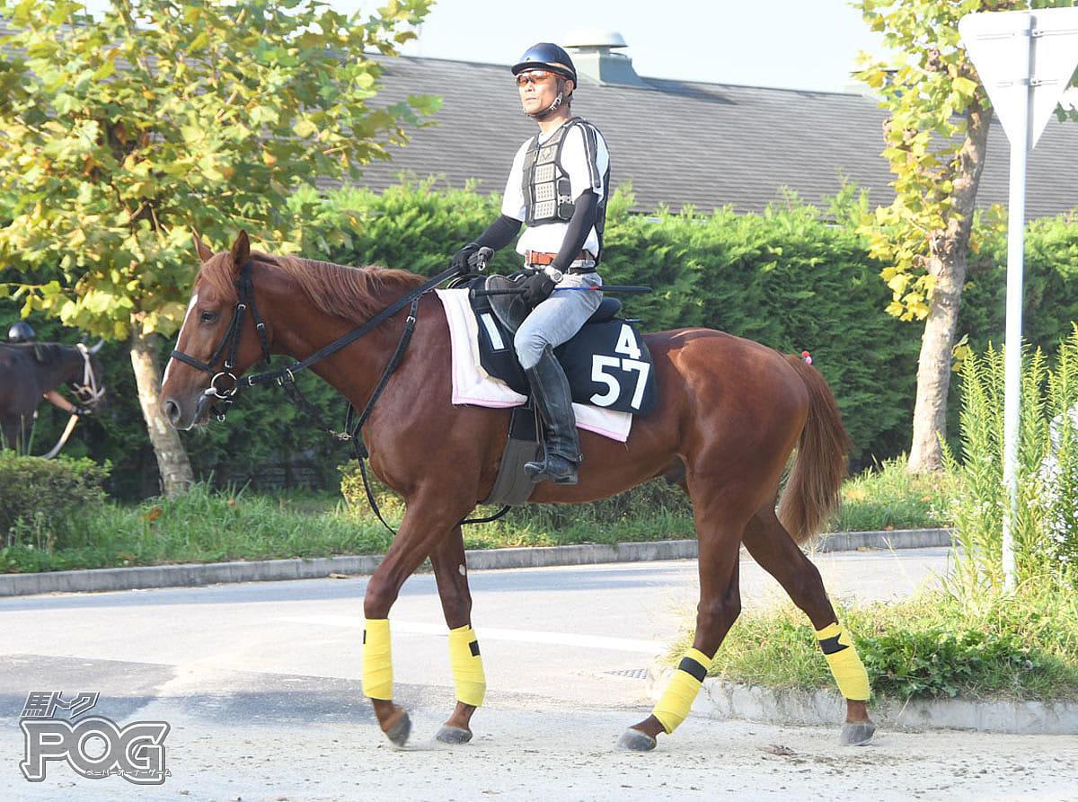 シュナイデンの馬体写真