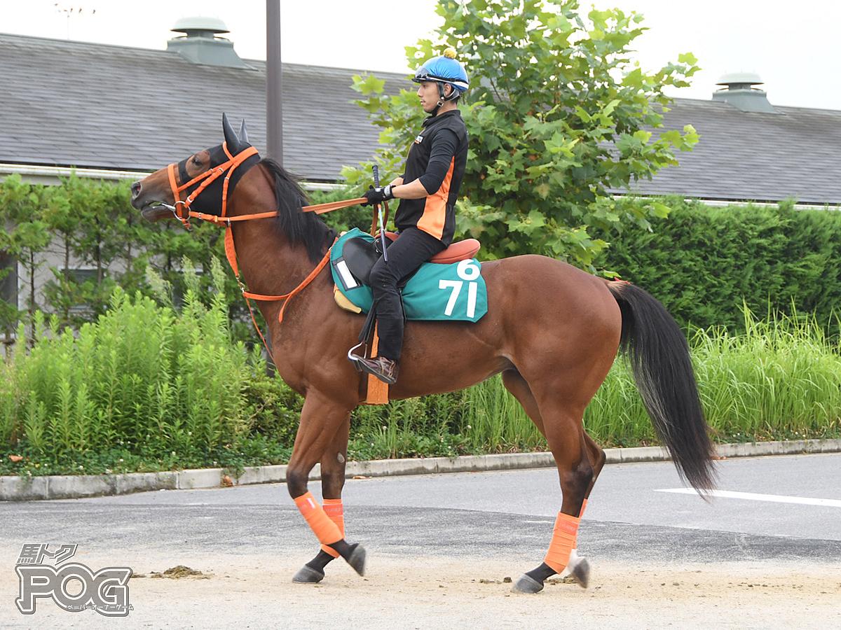 ノーフェイクの馬体写真