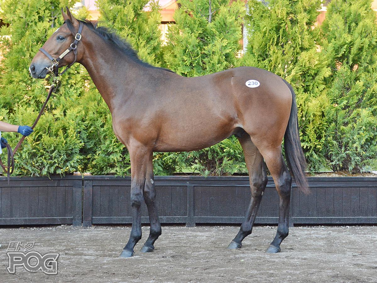デルマウオッカの馬体写真