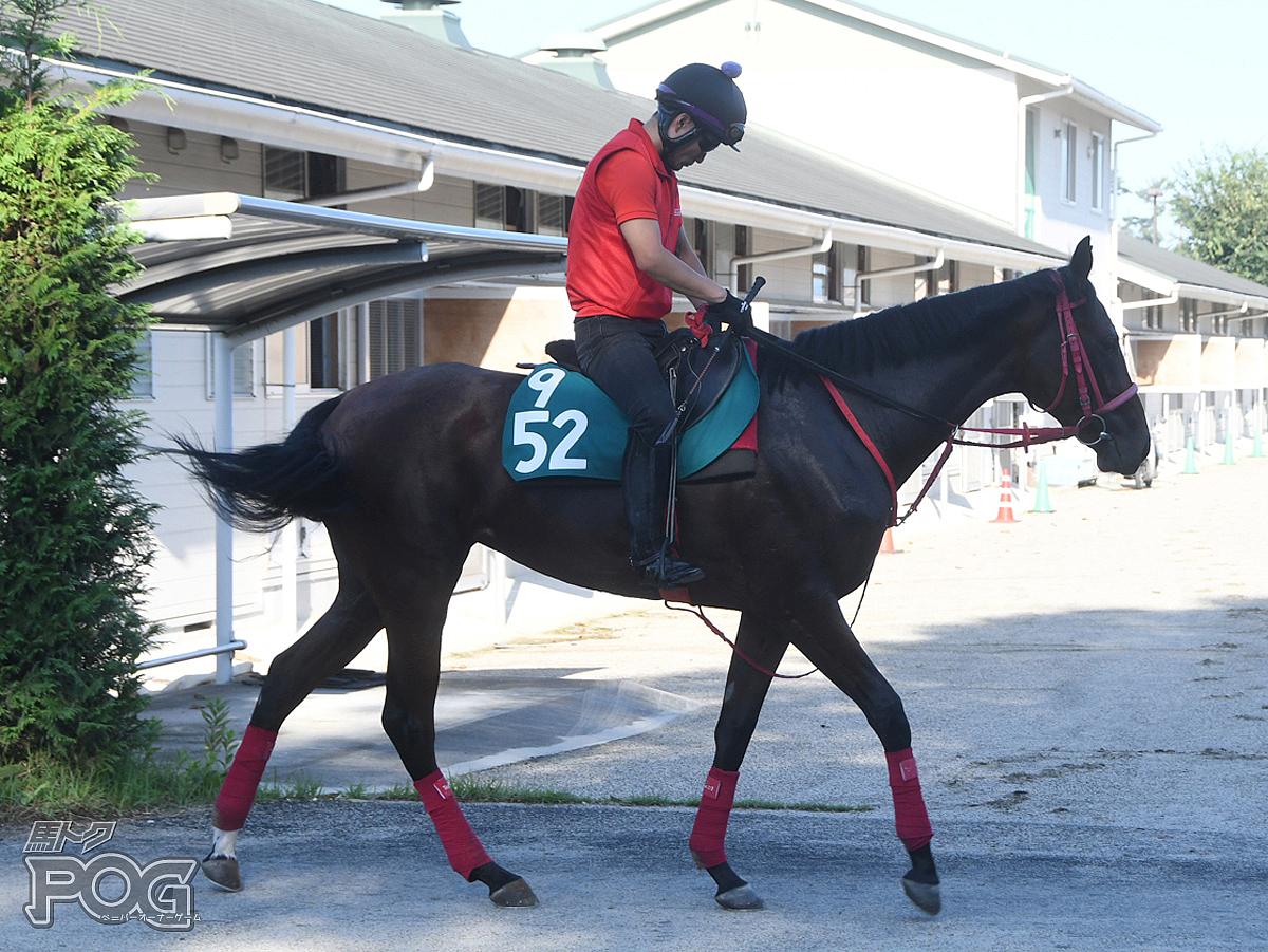 ボウルズの馬体写真