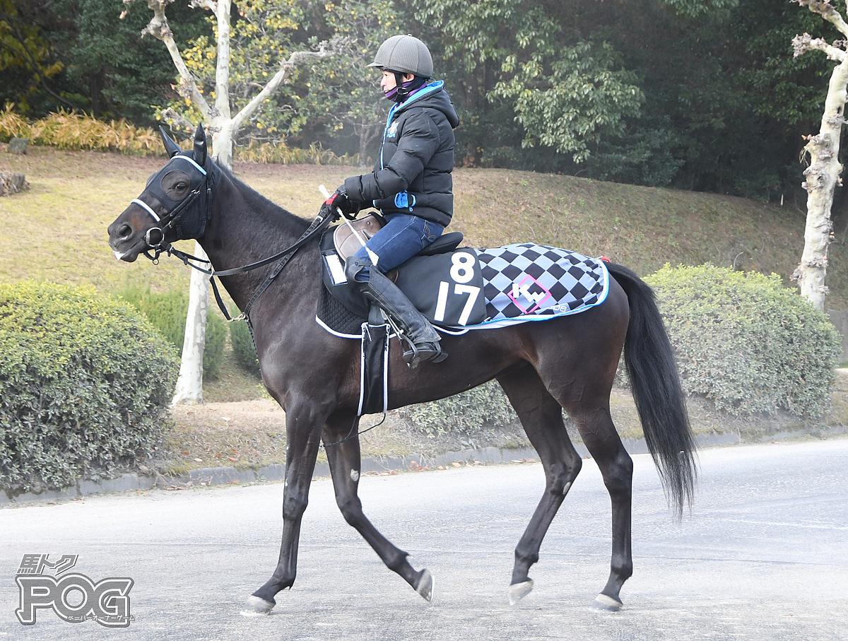 ビクトリークロスの馬体写真