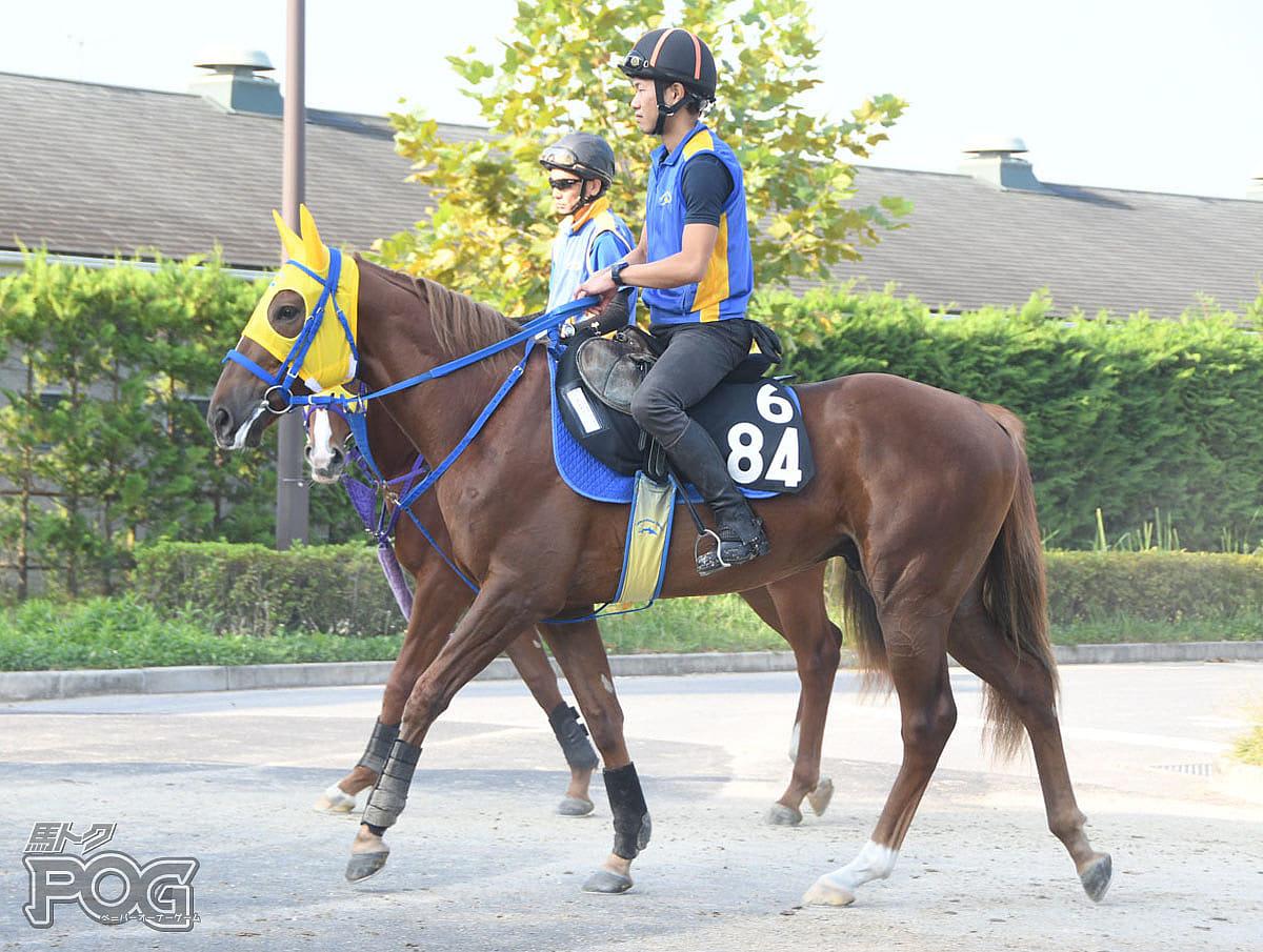 デクレアラーの馬体写真