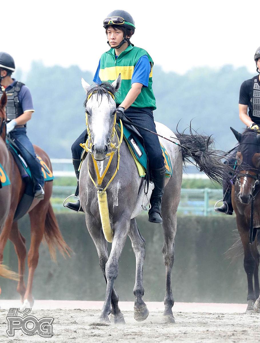 ラインギャラントの馬体写真