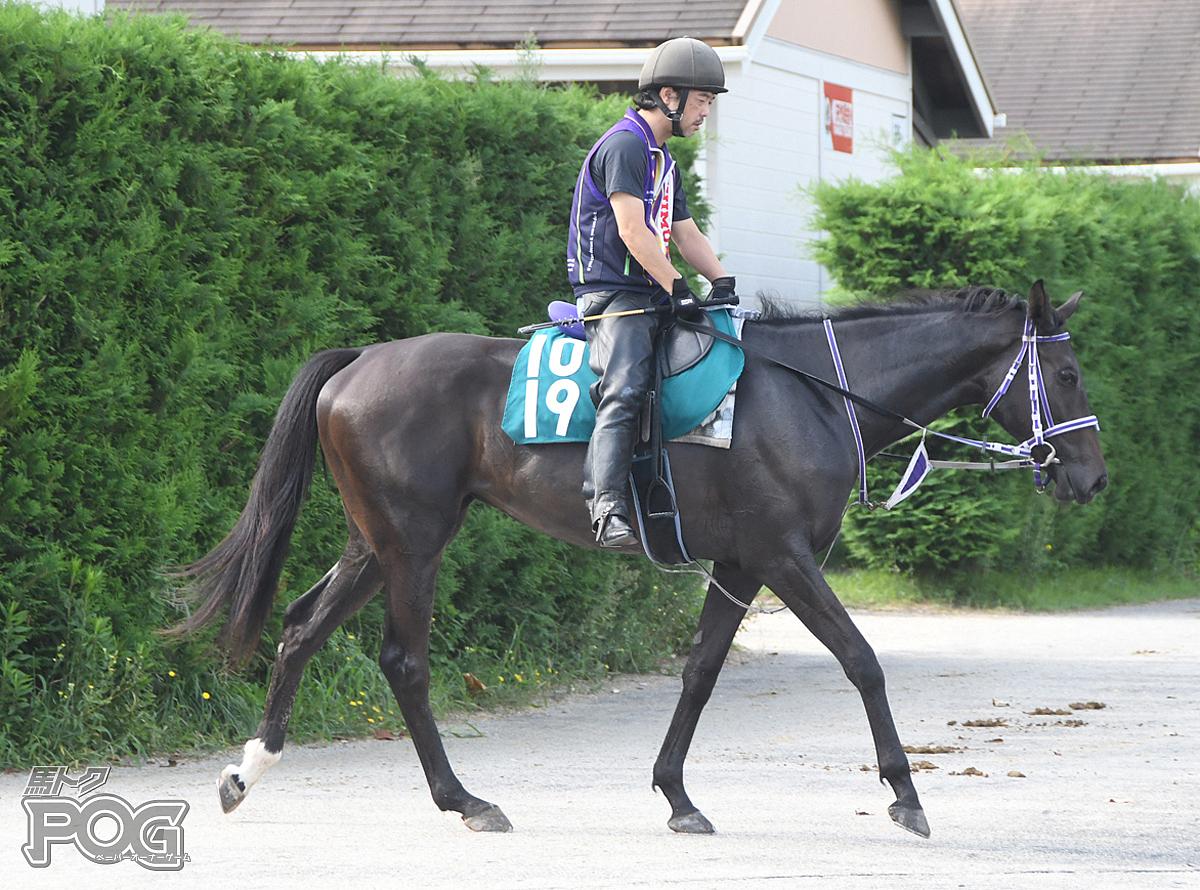 ヴィグランドアテナの馬体写真