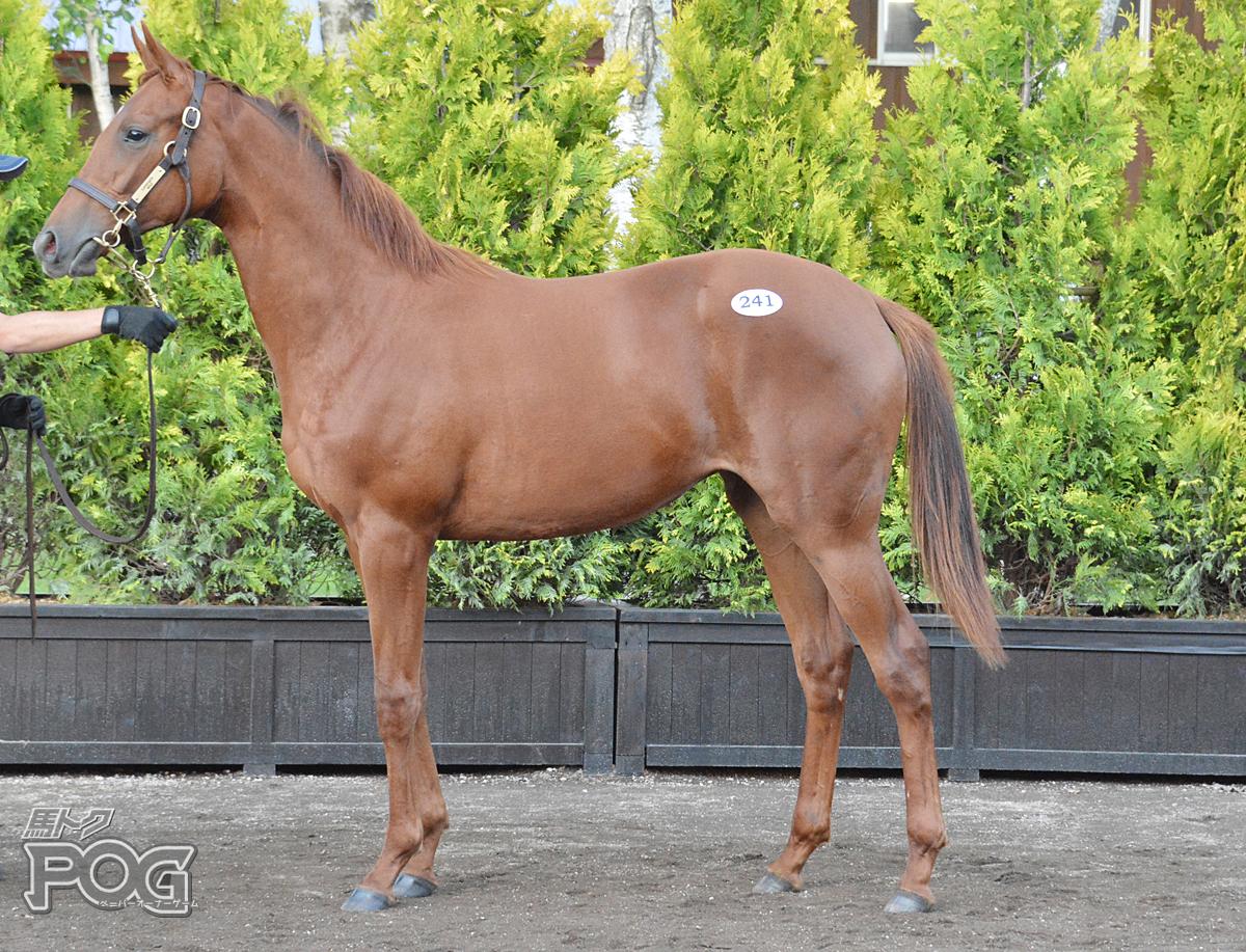 ラストマイアの馬体写真