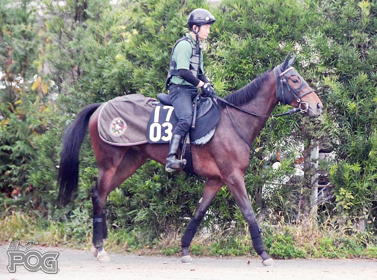 レディーキティの馬体写真