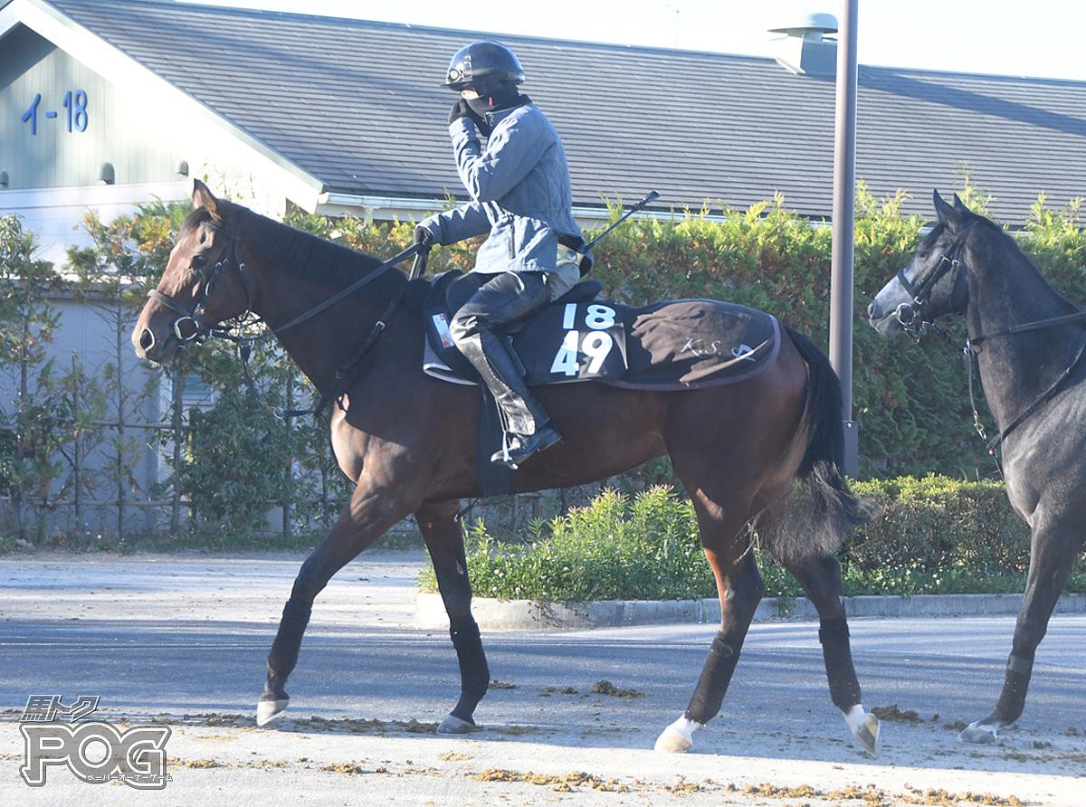 エアハンコックの馬体写真