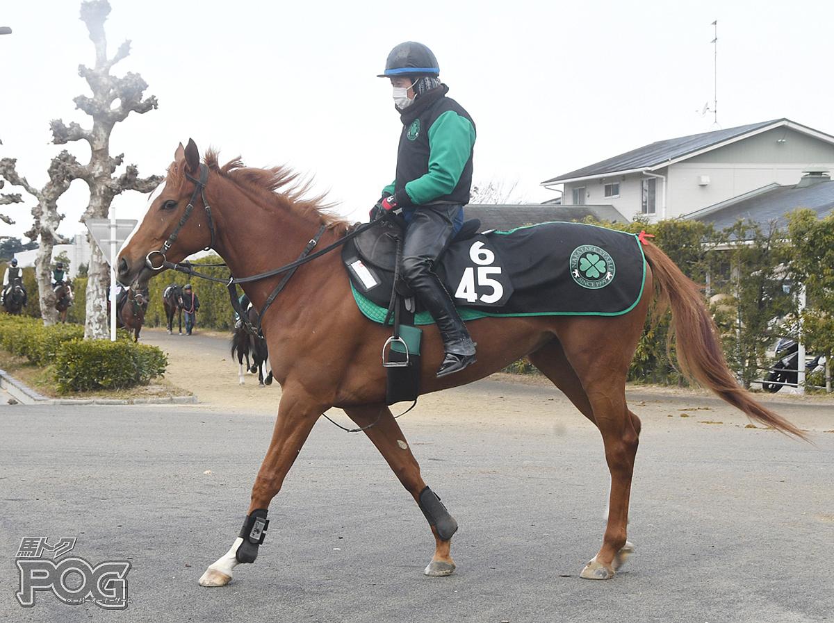 チカアレグレの馬体写真