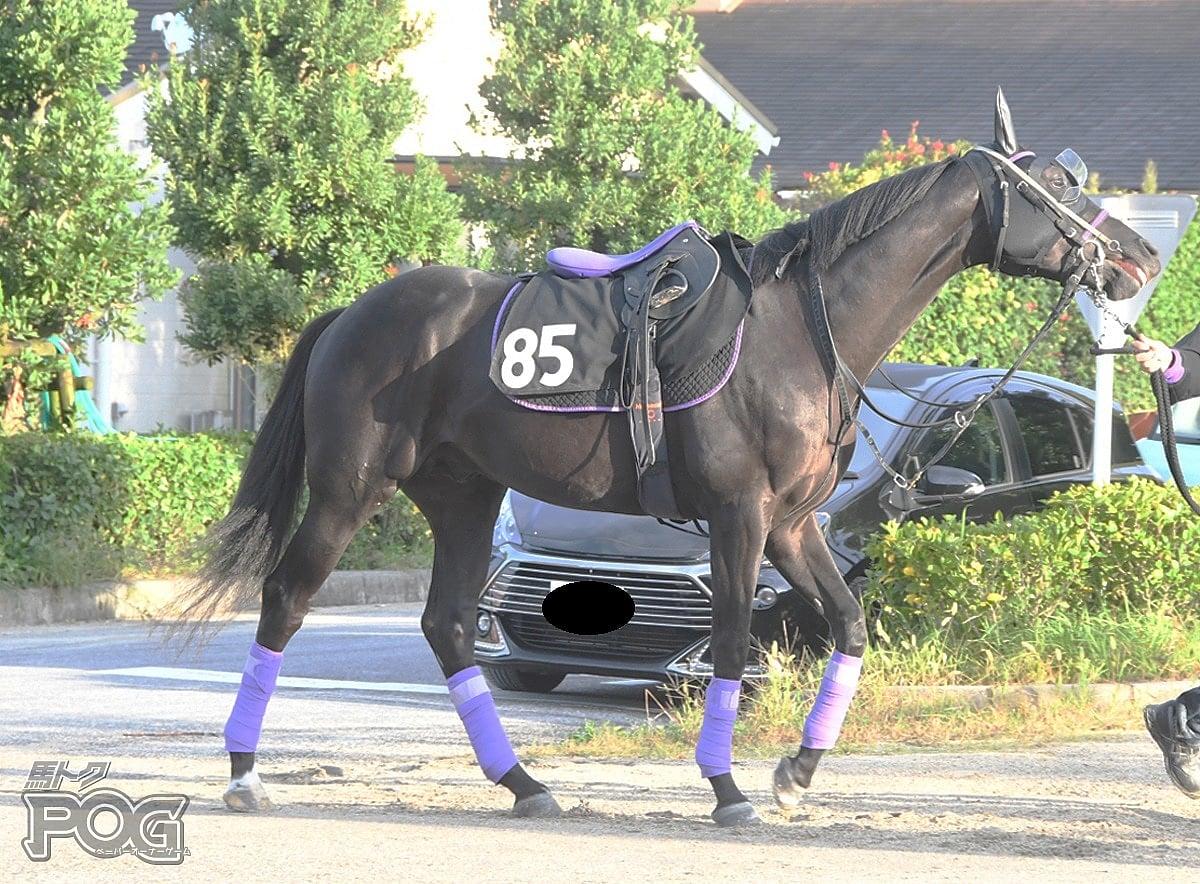アンサーズヒアの馬体写真