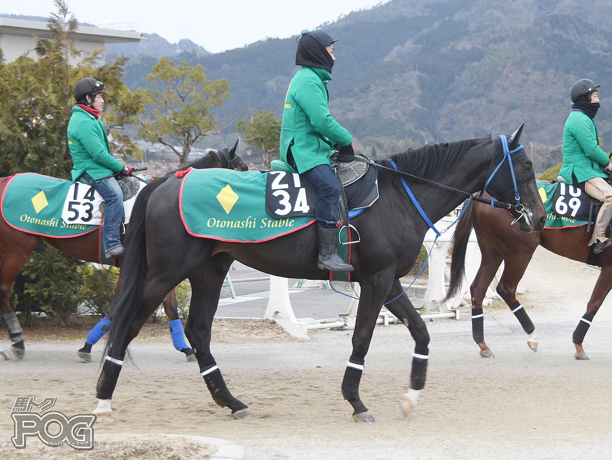 クルスデルスールの馬体写真