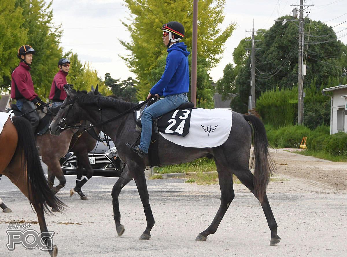 オメガパフュームの馬体写真
